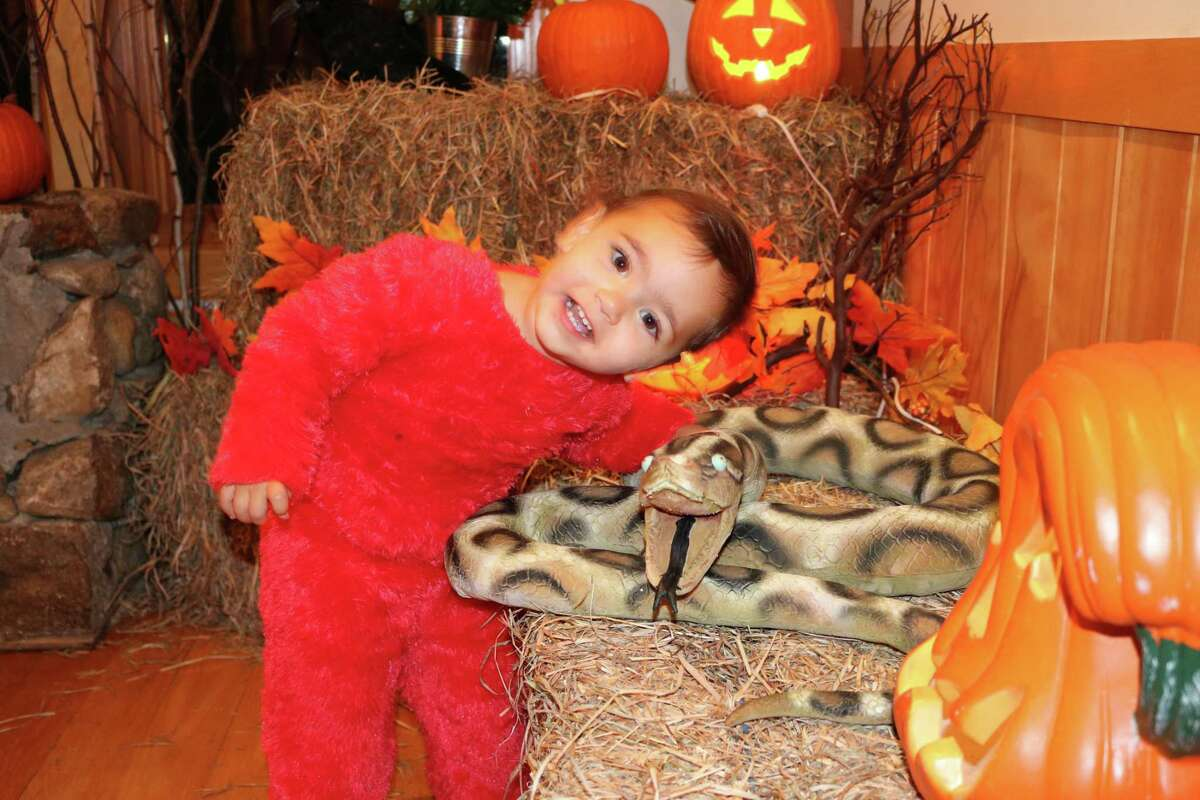 The Darien Nature Center will be holding its annual Hoot & Howl on Sunday.