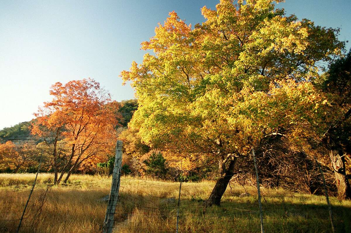 Fall is here - even in San Antonio- and leaves are turning. Now is the perfect time to visit Lost Maples State Nature Area near Vanderpool and check out the foliage. A reader explains how leaves change colors and celebrates