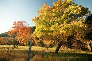 """Fall is here — even in San Antonio— and leaves are turning. Now is the perfect time to visit Lost Maples State Nature Area near Vanderpool and check out the foliage. A reader explains how leaves change colors and celebrates """"leaf peepers"""" near and far."""