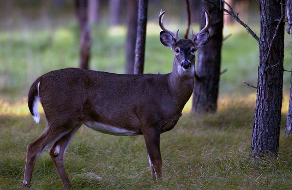 Opponents of a ban on deer baiting and feeding are mulling their options after a bill to lift the ban did not make it past the governor's desk.