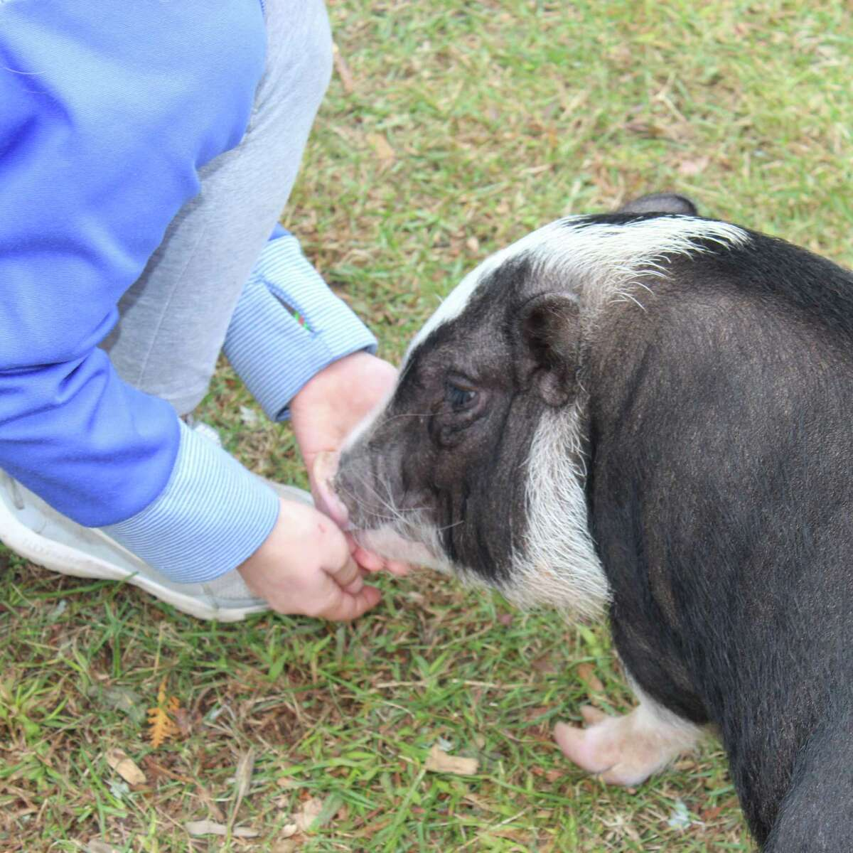 Squiggles the pig