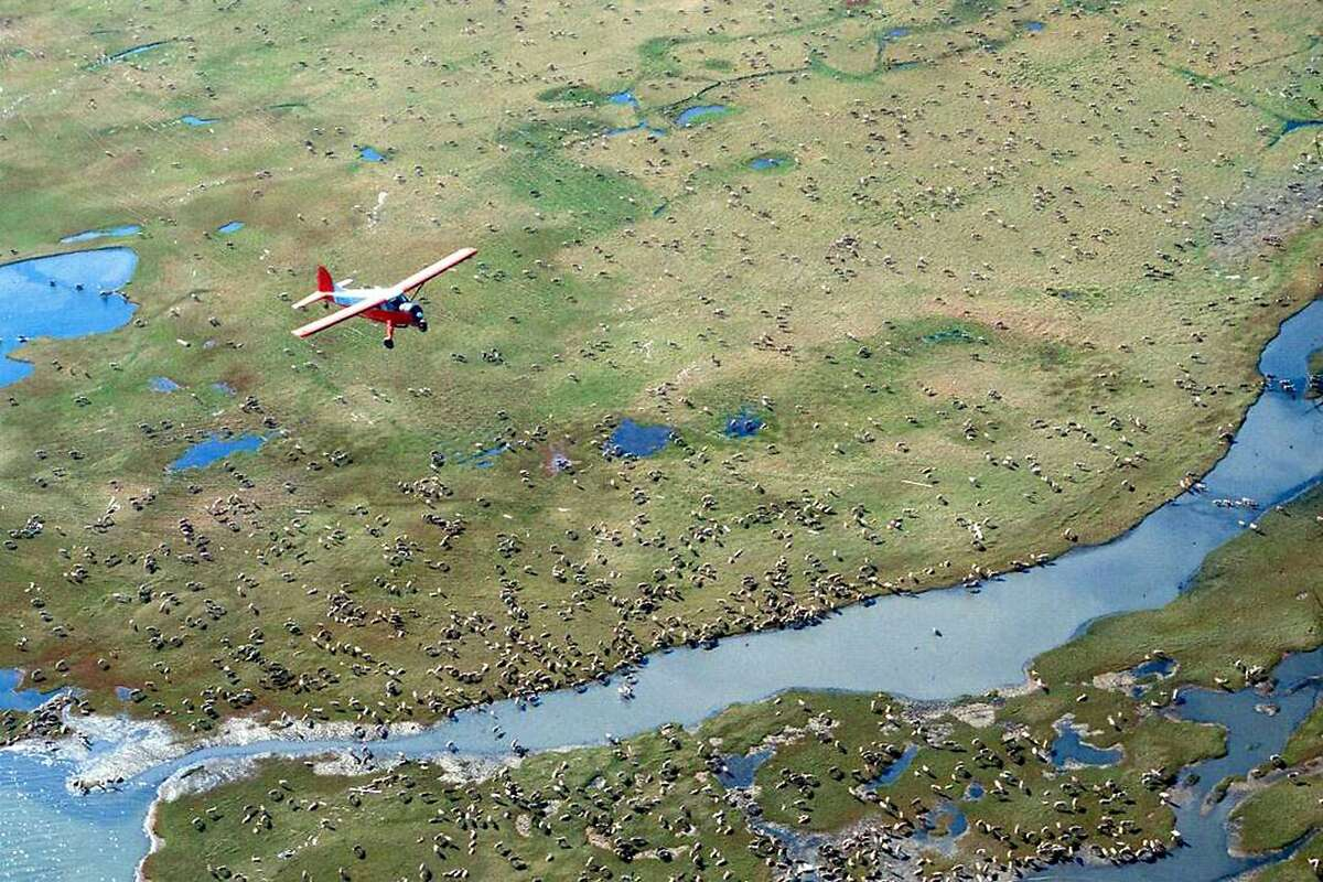 FILE - In this undated photo provided by the U.S. Fish and Wildlife Service, an airplane flies over caribou from the Porcupine Caribou Herd on the coastal plain of the Arctic National Wildlife Refuge in northeast Alaska. The refuge takes up an area nearly the size of South Carolina in Alaska's northeast corner. The Interior Department hopes to conduct a lease sale by the end of the year. The U.S. Geological Survey estimates the plain holds 10.4 billion barrels of oil. U.S. Sen. Lisa Murkowski, R-Alaska, calls the coastal plain North America's greatest prospect for conventional petroleum production. Congress did not take a direct vote on opening the refuge. Instead, a provision for lease sales was included in President Donald Trump's Tax Cuts and Jobs Act in Dec. 2017. More than 30 groups have joined a coalition, the Arctic Refuge Defense Campaign, dedicated to protecting the refuge, which provides breeding habitat to polar bears, migratory birds and the Porcupine Caribou Herd shared with Canada. (U.S. Fish and Wildlife Service via AP)