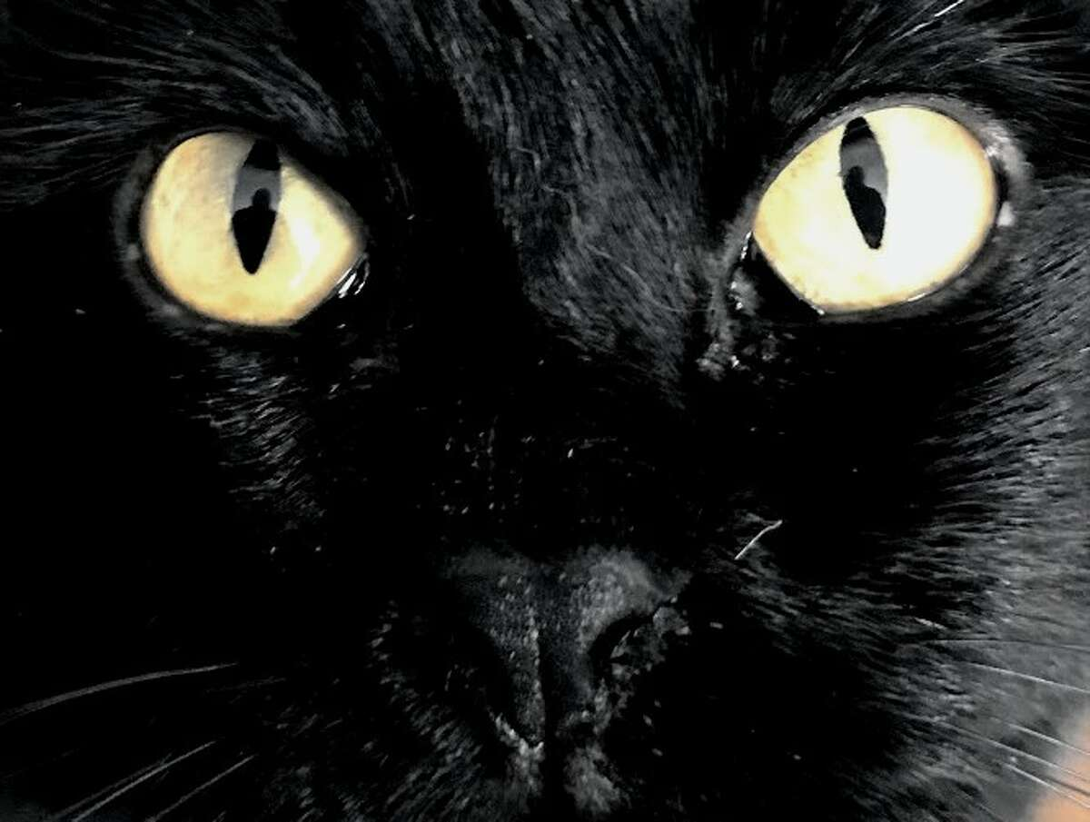 Studies show that black cats are harder to adopt than cats of other colors.