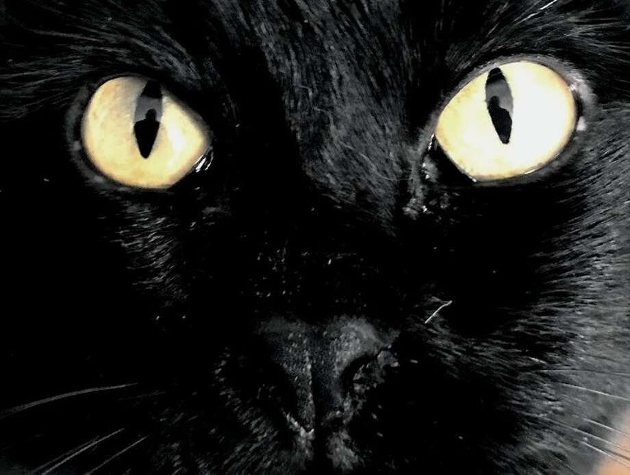 Studies show that black cats are harder to adopt than cats of other colors. Photo: Jordan Fenster