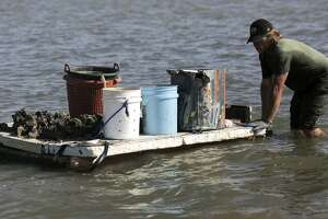 The Texas Parks and Wildlife Department announced closures for the state's 2019-20 oyster season.