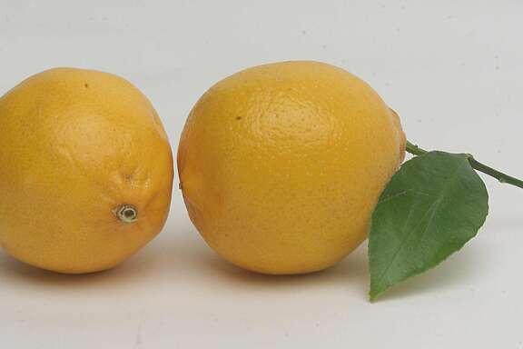 Stem and leaf meyer lemon. PHOTO BY JUANITO GARZA / STAFF