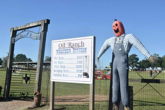 The Oil Ranch has decorated the entire ranchwith handmade scarecrowswith pumpkins for heads.