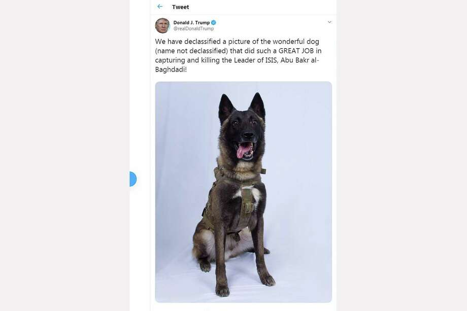 This screen shot of US President Donald Trump Twitter account taken on October 28, 2019 in Washington DC, shows a picture of a dog that helped capture the Leader of ISIS Abu Bakr al-Baghdadi. Photo: Eric Baradat / Twitter Via Getty Images / AFP or licensors