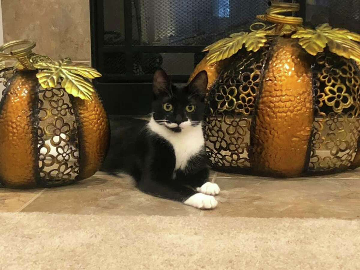 Midland Daily News readers celebrate National Cat Day 2019 with photos of their favorite felines. (Photo provided)