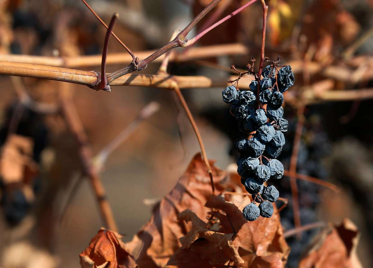 Grapes remain on a vine damaged by fire in Will Bucklin's Old Hill Ranch vineyard in Glen Ellen, Calif. on Thursday, Nov. 2, 2017. Bucklin only lost a small percentage of the vines in last month's devastating Wine Country fires.