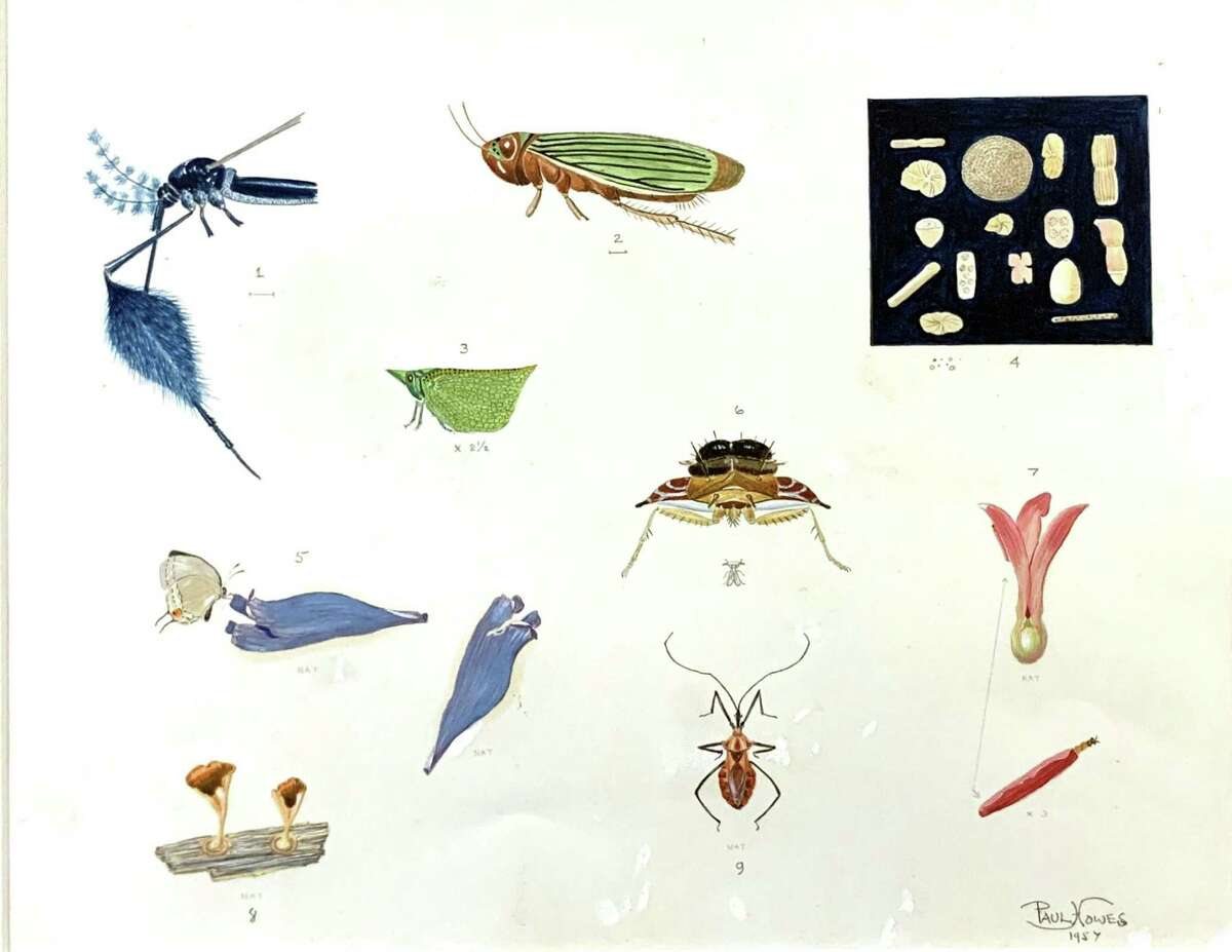 """Paul Griswold Howes (American, 1892-1984) """"Untitled (Insect, Fungi, and Pollen Study),"""" 1957. Watercolor. Gift of the artist, Bruce Museum Collection."""