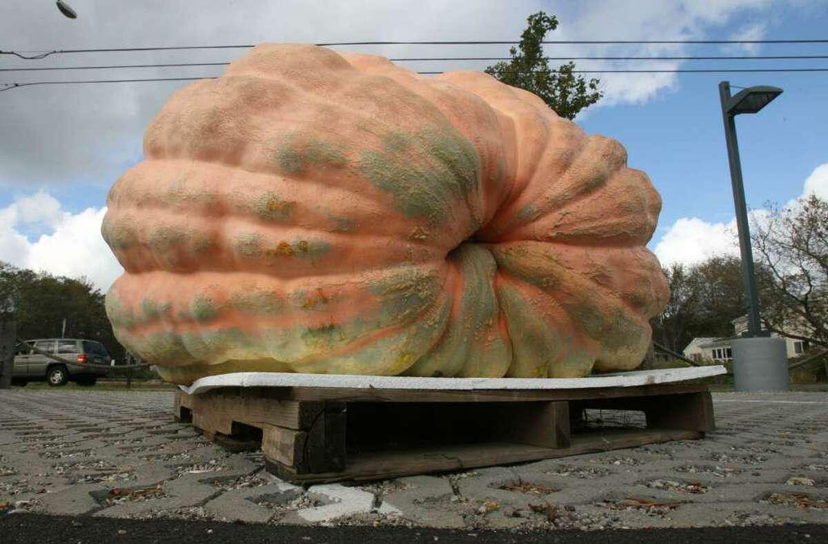 The CT Giant Squash and Pumpkin Grower's Association's winning pumpkin.