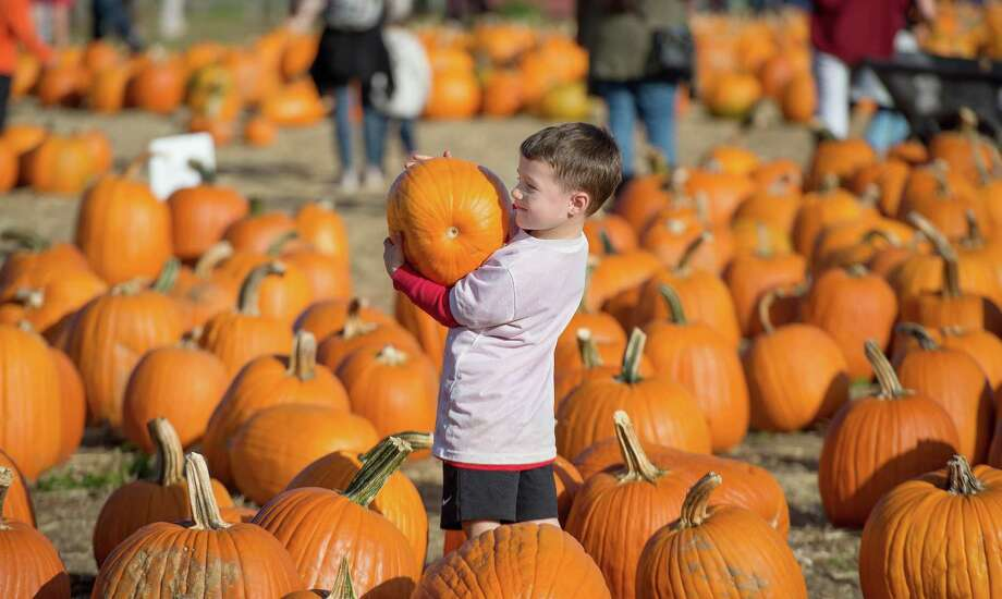Owen Palmieri, 3, finds a pumpkin at Children's Festival for Unicef. Photo: Bryan Haeffele / Hearst Connecticut Media / Shelton Herald