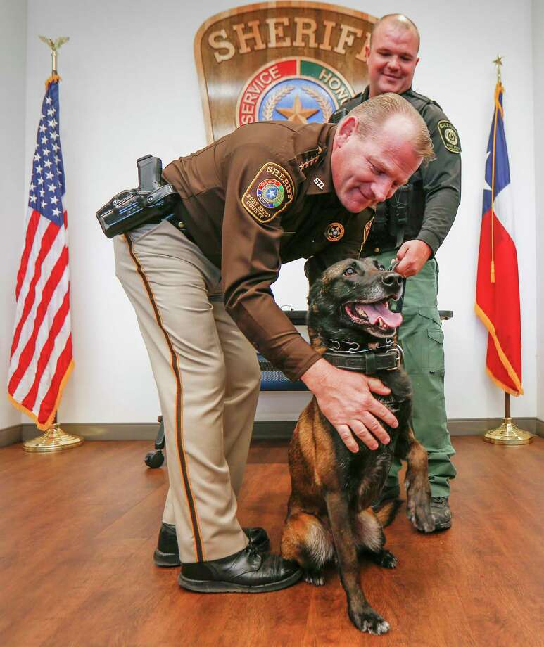 Fort Bend County Sheriff Troy E. Nehls (left) congratulates K-9 Kaja with Deputy Daniel Tondera during a retirement ceremony Wednesday, Oct. 30, 2019, in Richmond. He wears his uniform to services at Faith United Methodist Church in Richmond, where security team members sit in pews. Photo: Steve Gonzales, Houston Chronicle / Staff Photographer / © 2019 Houston Chronicle