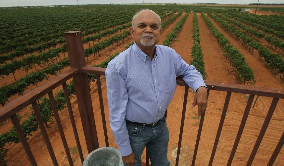 Vijay Reddy owns Reddy Vineyards in Terry County, Texas and has more than 200 acres planted with grapes. Reddy was growing peanuts and cotton in the past, but is now 100 percent vested in grape growing for the wine industry. Reddy is a soil scientist and grows grapes for wineries such as Becker Vineyards, Llano Estacado, Caprock, Brushy Creek and many more. Photo: JOHN DAVENPORT, STAFF / SAN ANTONIO EXPRESS-NEWS / ©San Antonio Express-News/Photo may be sold to the public