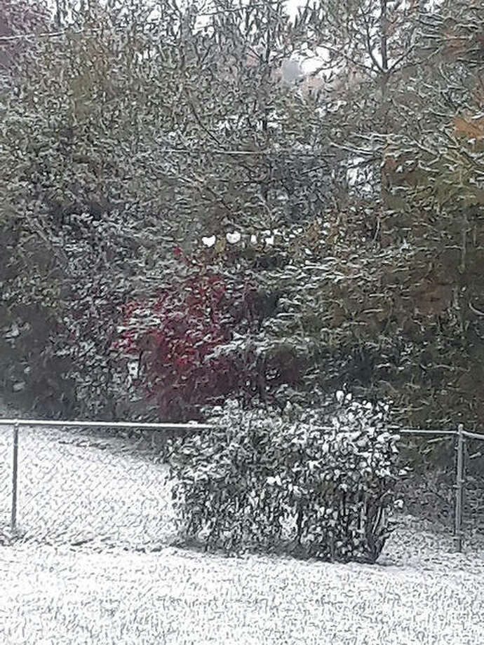 Snow covers grapevine leaves above a red bush. Linda Reining | Reader photo