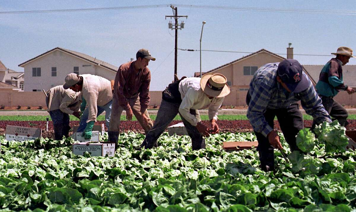 FILE--Farmworkers pick lettuce in a field near Modesto, Calif., April 14, 1999. Track houses in the background are an example of urban growth that is encroaching onto farmland. California's 89,000 farm owners enter 2002 with 50,000 fewer acres to farm, thanks to urban growth. (AP Photo/Rich Pedroncelli, File) CAT AN APRIL 14, 1999, FILE PHOTO ALSO RAN 11/12/2003