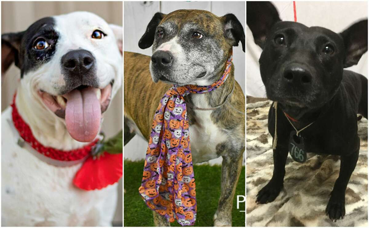 PHOTOS: Houston's least adoptable dogsThese sweet pups have come close to being euthanized after being overlooked at several Houston-area animal shelters. >>>Click through the photos for a look at Houston dogs that desperately need and deserve homes....