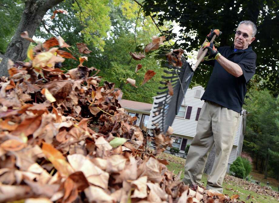 "Sam Caiola rakes up leaves ""the old-fashioned way."" Michael Potter gives some suggestions for ways fallen leaves can benefit your landscape. Photo: Autumn Driscoll, Staff Photographer / Autumn Driscoll / Connecticut Post"