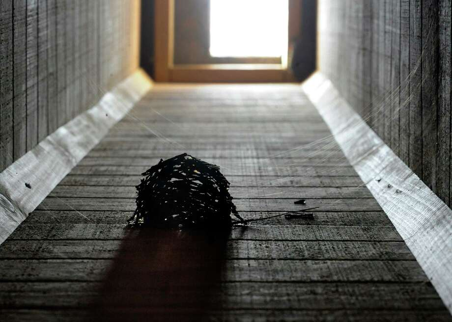 In this Wednesday, Oct. 9, 2019 photo, a chimney swift nest surrounded by spider webs is shown clinging to the inside of a fake chimney built as habitat for the birds in Birmingham, Ala. People from New England to Texas are building fake chimneys to provide nesting spots and migration motels for chimney swifts, which can rest only by using their toes as grappling hooks to hang from rough, vertical surfaces. (AP Photo/Jay Reeves) Photo: Jay Reeves, STF / Associated Press / Copyright 2019 The Associated Press. All rights reserved.