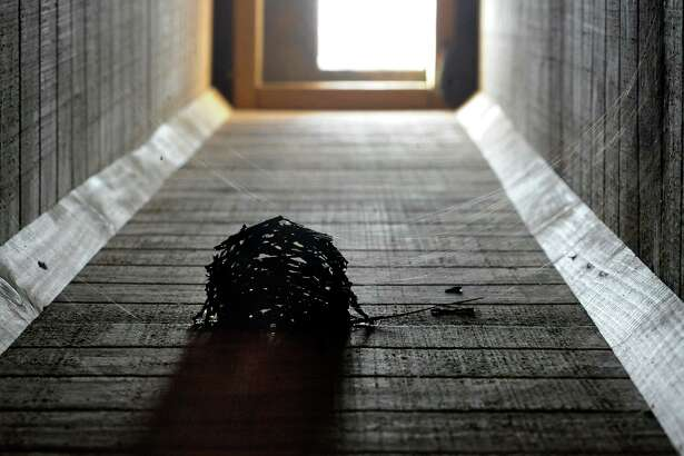 In this Wednesday, Oct. 9, 2019 photo, a chimney swift nest surrounded by spider webs is shown clinging to the inside of a fake chimney built as habitat for the birds in Birmingham, Ala. People from New England to Texas are building fake chimneys to provide nesting spots and migration motels for chimney swifts, which can rest only by using their toes as grappling hooks to hang from rough, vertical surfaces. (AP Photo/Jay Reeves)