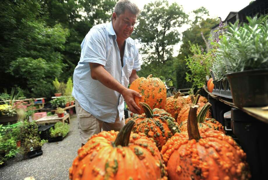 Richard Moore puts out knucklehead pumpkins for sale at the Moorefield Herb Farm at 2157 Huntington Turnpike in Trumbull, Conn. on Monday, October 1, 2018. Developers are now seeking to build 11 age-restricted homes on the property. Photo: Brian A. Pounds / Hearst Connecticut Media / Connecticut Post