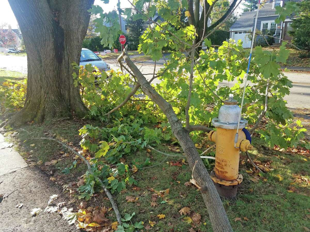 A downed tree on South Benson Road in Fairfield.