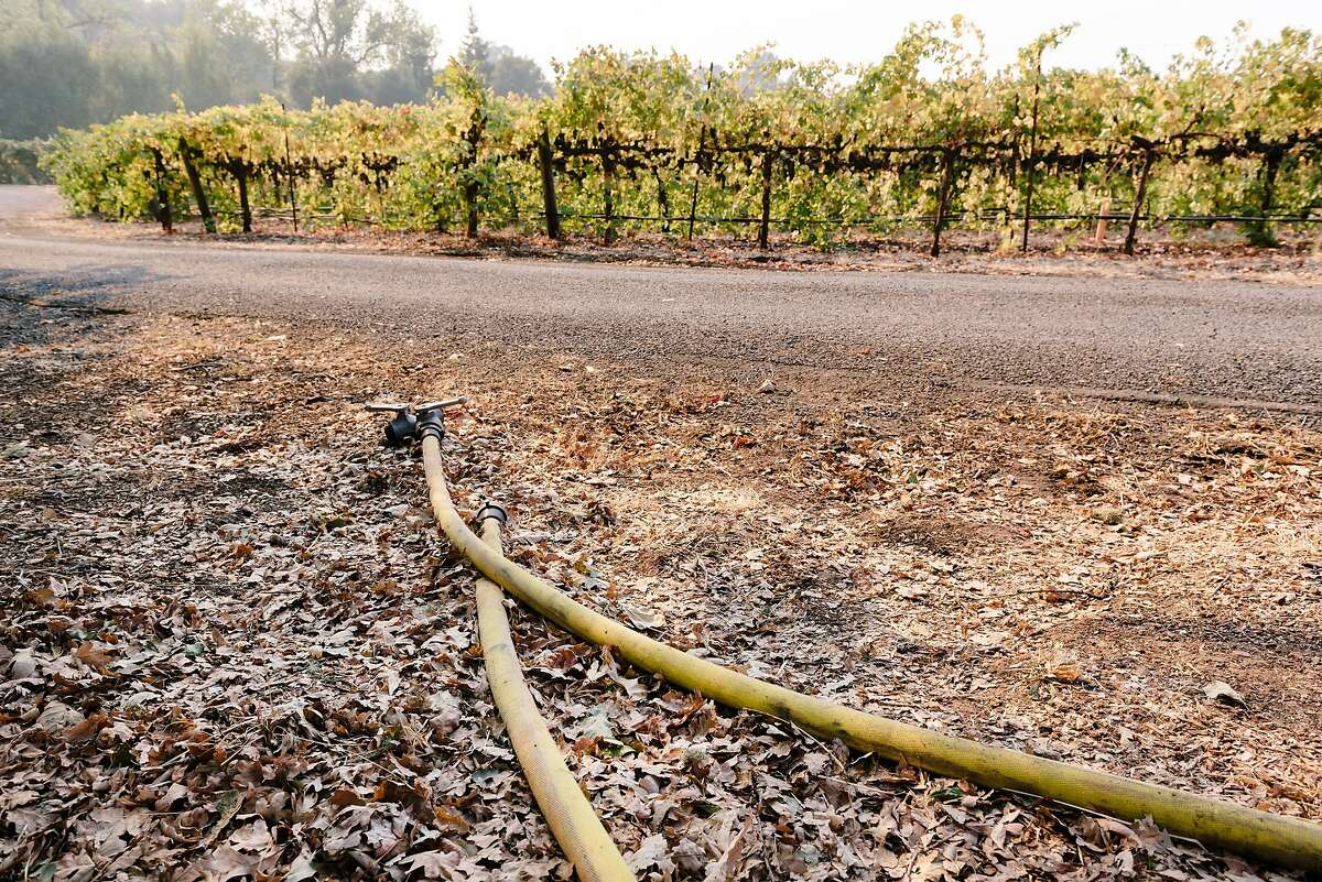 Fire hoses that were used try firefighters to fight back a recent encroachment by the Kincade Fire, lay near cabernet vines at Hafner Vienyards in Healdsburg, California, on Tuesday, Oct. 29, 2019.