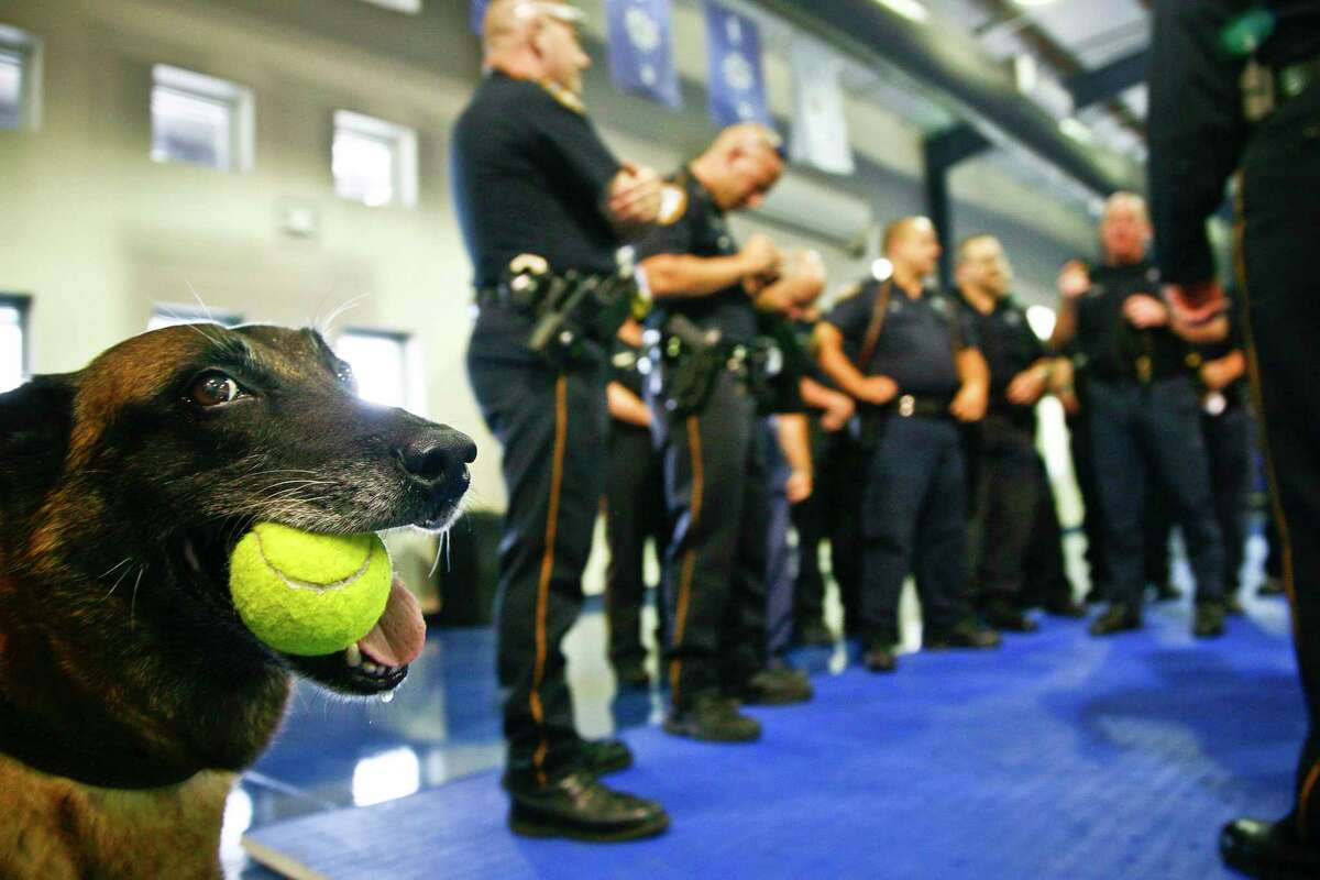 Law enforcement K-9s work hard to keep us safe, and they bond with their handlers over years of service. But they are considered public property. Proposition 10 would remove a fee to transfer such law enforcement animals to their handlers at retirement. It's one more reason to vote.