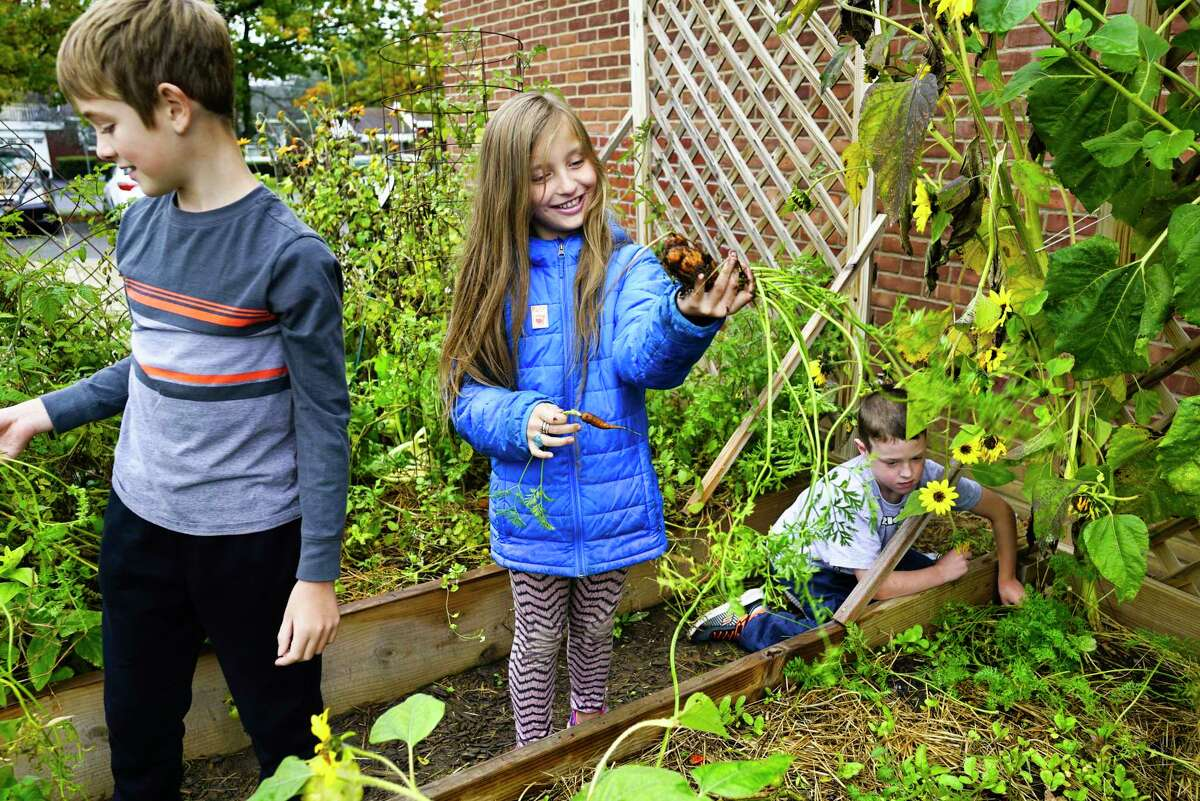 Zoller Elementary School student Abrianna Oliver, 10, center, looks over a carrot she pulled up from the school's garden as fellow students, River Henriksen, 10, left, and Dylan LaVarnway, 8, work in the garden on Monday, Oct. 21, 2019, in Schenectady, N.Y. (Paul Buckowski/Times Union)