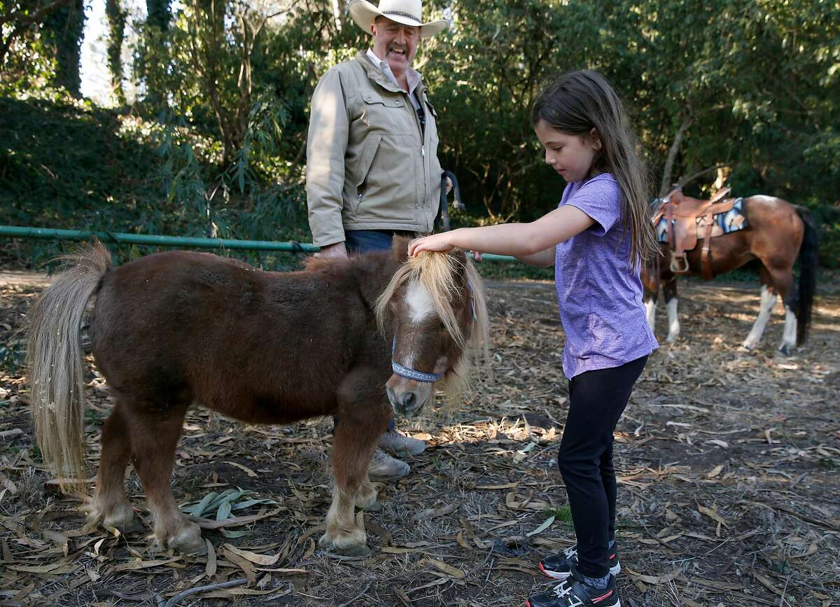 Dani Colloff, 6, pets Lightning the miniature horse at the Bercut Equitation Field at Golden Gate Park in San Francisco, Calif. on Saturday, Nov. 2, 2019. Chaparral Ranch is providing riding lessons and trail rides at the park for the first time in nearly 20 years.