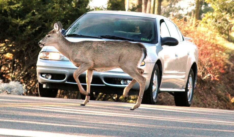AAA Northeast says November is the month that has the most motor vehicle collisions with deer. A crash data analysis by AAA Northeast found 72 percent of deer crashes generally occur outside daylight hours, especially during the 5 to- 7 p.m. commute. Photo: SCOTT MCCLOSKEY / AP / WHEELING INTELLIGENCER