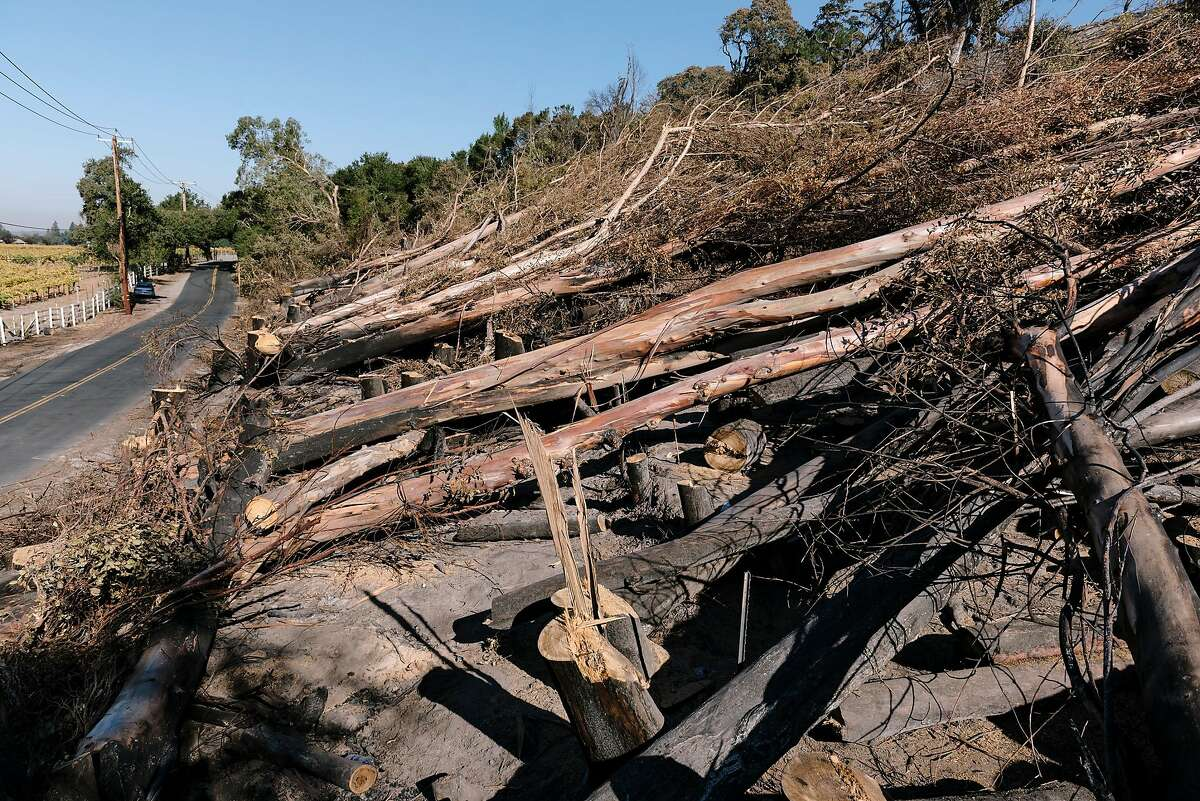 Burned trees are felled along Faught Road in Healdsburg, California, on Monday, November 4th, 2019.