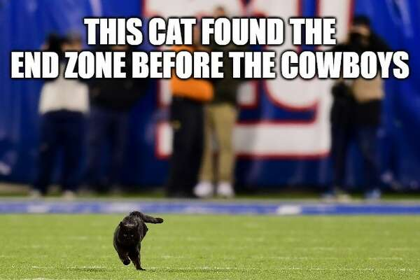 Memes Celebrate A Black Cat During Giants Loss To Cowboys Expressnews Com