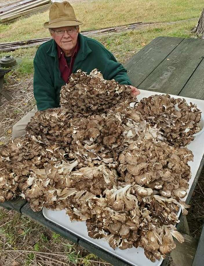 Gary Vondrasek sits next to pieces of one 45.5 pound Hen of the Woods mushroom he found in Madison County. Photo: For The Intelligencer