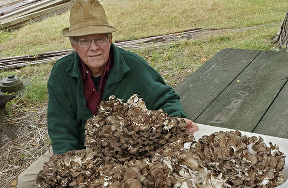 Gary Vondrasek, of Edwardsville, sits next to pieces of one 45.5-pound Hen of the Woods mushroom he recently found in Madison County.