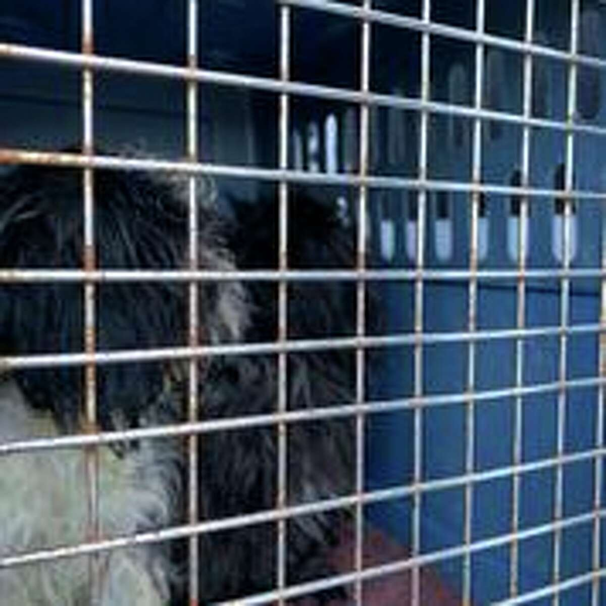 The Montgomery County SPCA says it took five grown dogs and nine puppies from a home in the town of Florida where they said the animals were found living in filth.