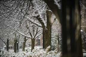Snow falls in Midland Wednesday, Nov. 6, 2019. (Katy Kildee/kkildee@mdn.net)
