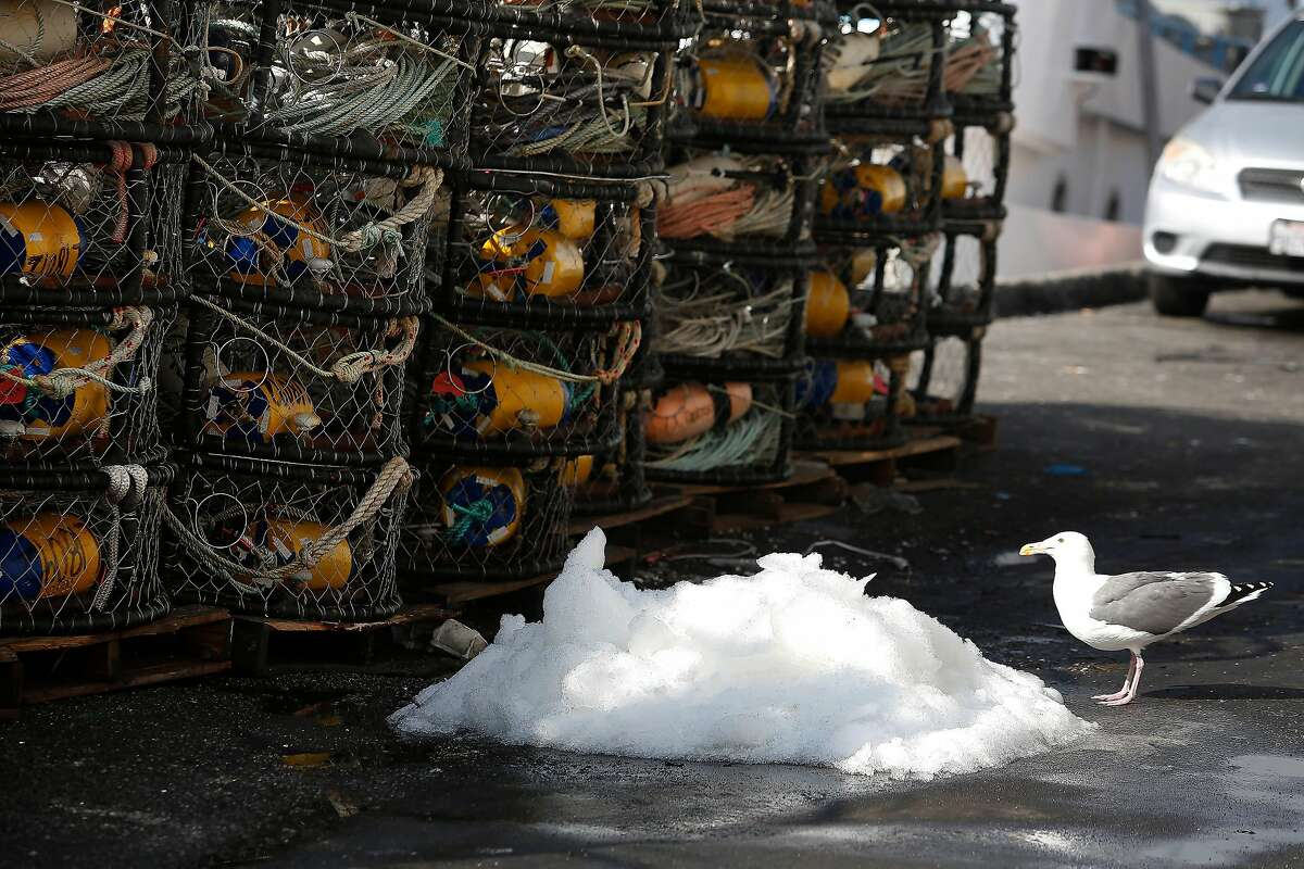 A seagull samples some crushed ice on the dock next to crab traps stacked on Pier 45 on Wednesday, November 6, 2019 in San Francisco, Calif.