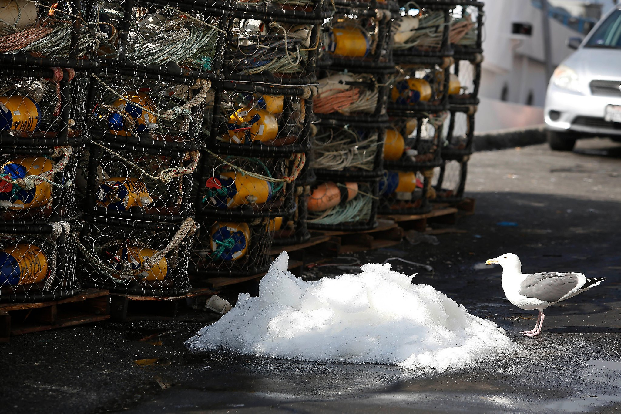 Commercial Dungeness crab season likely to be delayed to Dec. 15