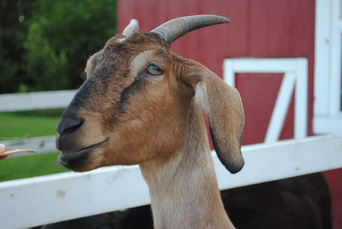 Uroliths have many names, but their presence in livestock animals is a serious condition.