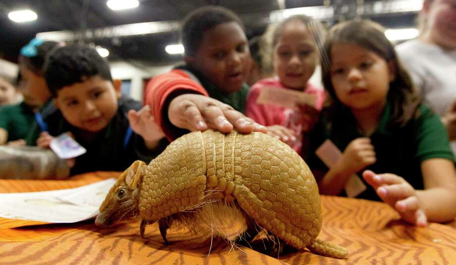 Students react to seeing a African three hulled armadillo during the annual Children's Festival at the Cynthia Woods Mitchell Pavilion, Thursday, Nov. 7, 2019, in The Woodlands. The four-day event, which exposes children to fine arts and science, includes two educational days for Houston area schools. The event is open to the public Nov. 9-10 from noon to 5 p.m. Cost is $10 per person. Children ages two and under are free. Photo: Jason Fochtman, Houston Chronicle / Staff Photographer / Houston Chronicle