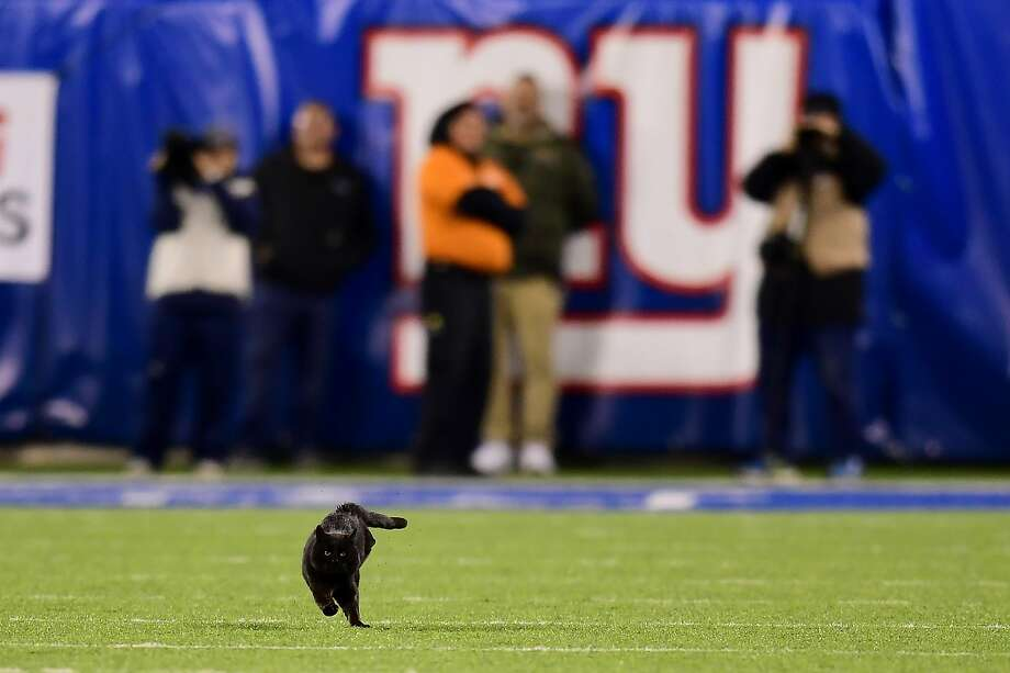 EAST RUTHERFORD, NEW JERSEY - NOVEMBER 04: A black cat runs on the field during the second quarter of the New York Giants and Dallas Cowboys game at MetLife Stadium on November 04, 2019 in East Rutherford, New Jersey. (Photo by Emilee Chinn/Getty Images) Photo: Emilee Chinn, Getty Images