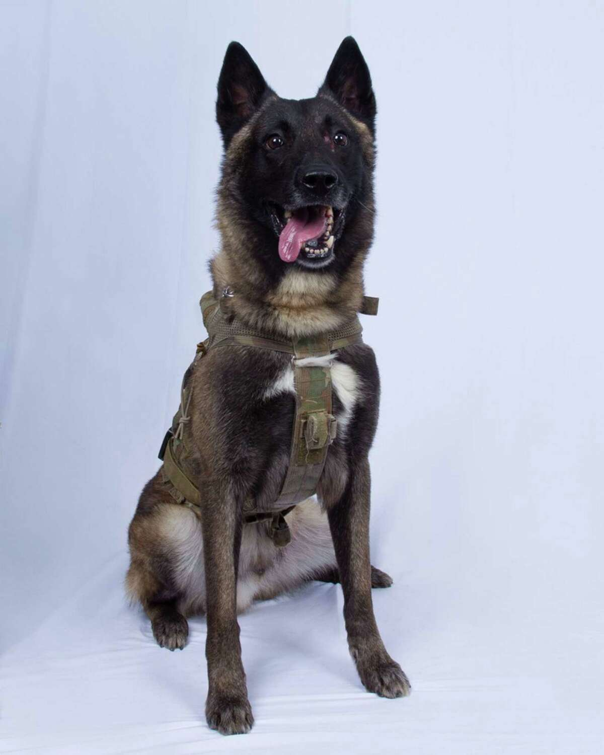 Conan sustained minor injuries during the Al-Baghdadi raid. President Donald Trump has praised Conan as a hero, but the president usually does not have much love for dogs. In fact, calling people dogs is a characteristic putdown for him.