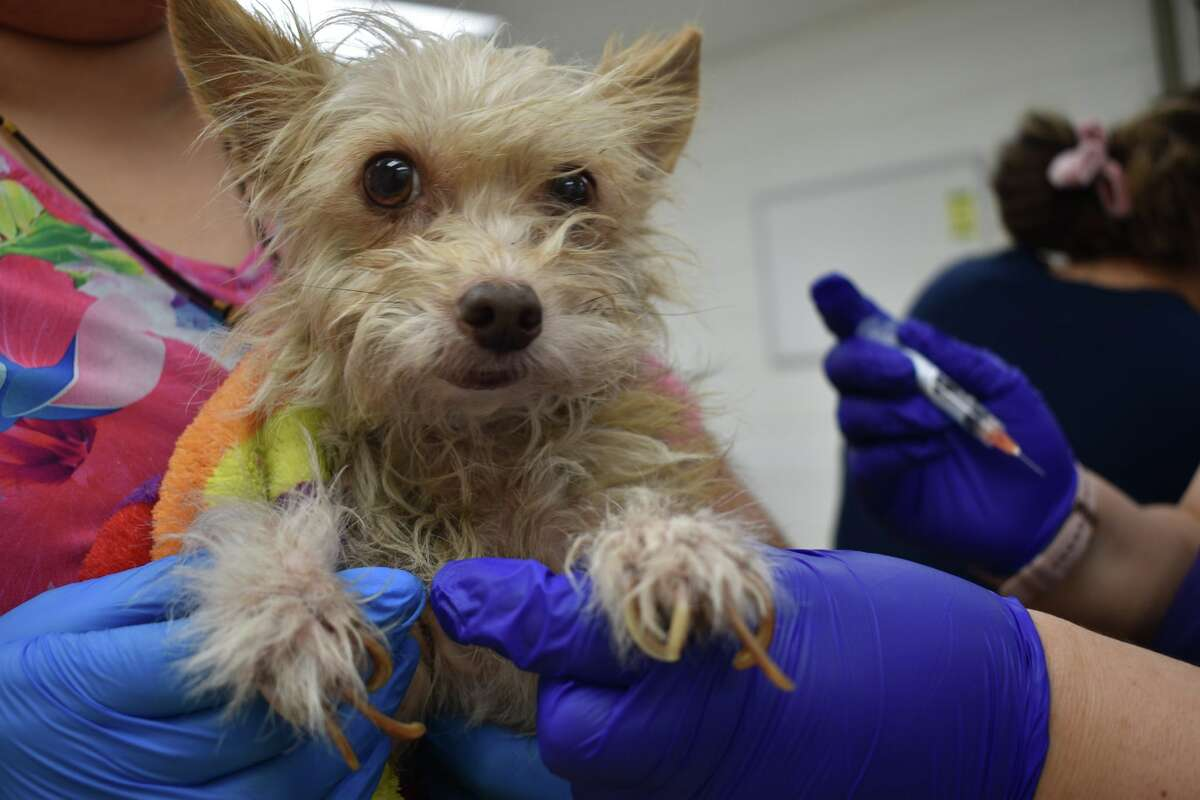 Fifteen dogs and three cats recently seized from a southeast Houston home were found tethered to stakes in the ground without access to adequate shelter or water. Officials believe the animals were left helpless for weeks on end during recent cold fronts and rainstorms.