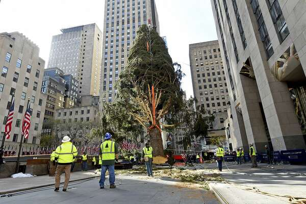 IMAGE DISTRIBUTED FOR TISHMAN SPEYER - The 2019 Rockefeller Center Christmas tree, a 77-foot tall, 12-ton Norway Spruce from Florida, N.Y., is craned into place, Saturday, Nov. 9, 2019, in New York. The 87thRockefeller Center Christmas Tree Lighting ceremony will take place on Wednesday, Dec. 4. (Diane Bondareff/AP Images for Tishman Speyer)