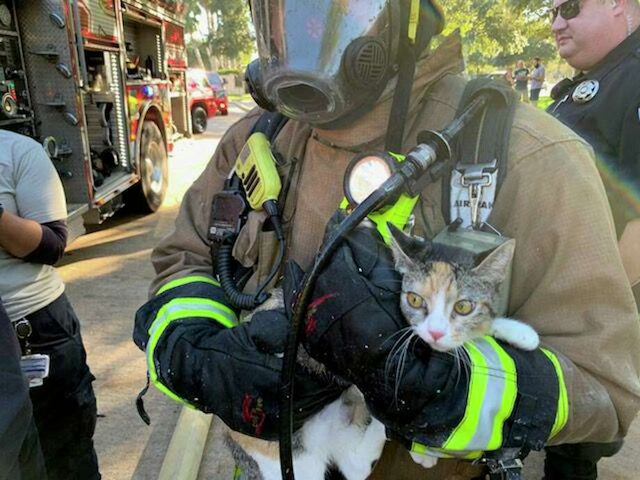 Community Volunteer Fire Department crews rescued three pets from a burning home in Canyon Gate. Photo: Courtesy Photo