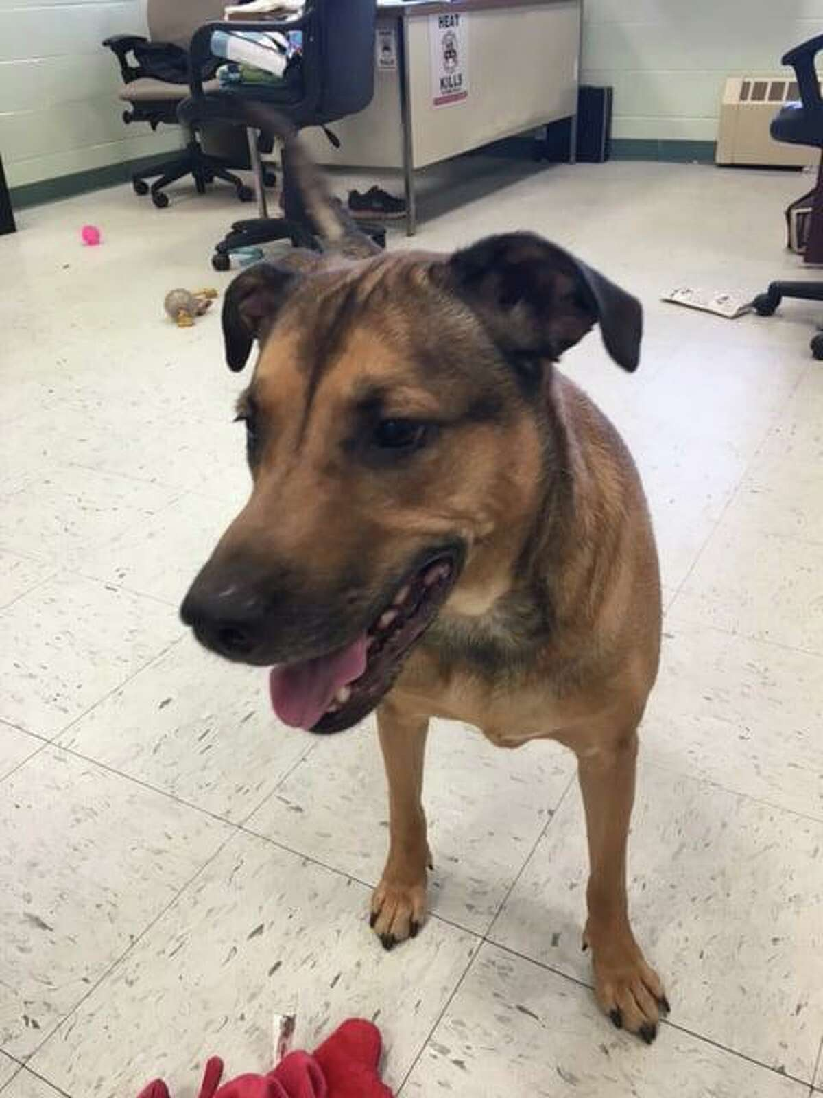 On Nov. 9, 2019, Fairfield Animal Control posted to pictures to its Facebook page seeking a home for Sunny, aka Moon Peace. It was the latest of several posts on the canine, whose owner died several months ago.