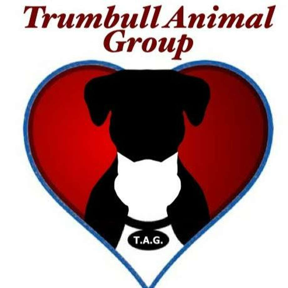 Trumbull Animal Group Photo: Contributed Photo