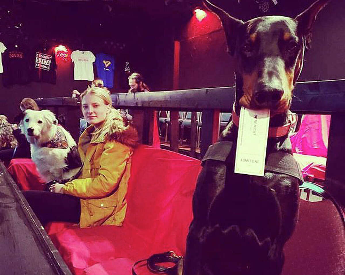 Dogs, wine and movies are all on tap at K9 Cinemas in Plano, Texas.